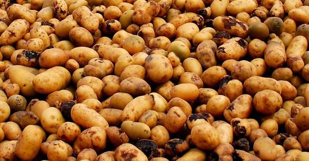 4 usandheder om kartofler afsløret